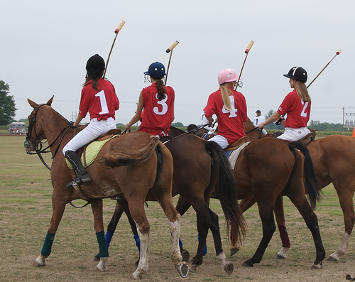 Polo Girls Horses