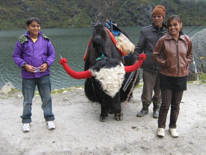 Kufri, Himachal Pradesh1