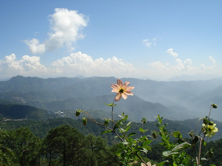 Top 6 Places To Visit In Kasauli