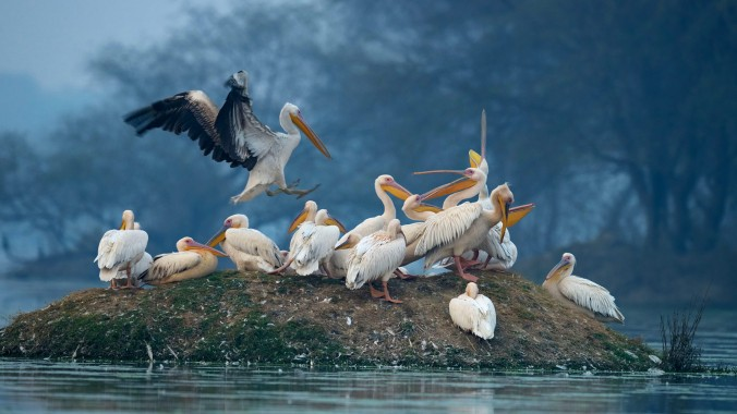 Bird Watching in Bharatpur Bird Sanctuary