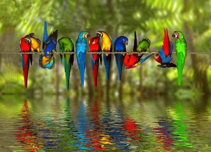 Island of Parrots