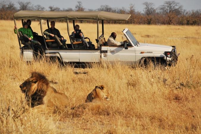 india wildlife experiences
